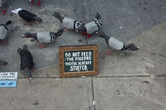 Art_Crawl-pidgeon flock